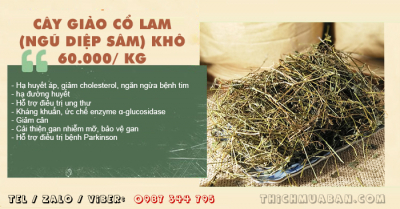 Cây Giảo Cổ Lam (Ngũ Diệp Sâm) khô