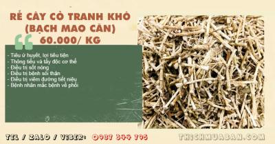 Rễ Cây Cỏ Tranh khô